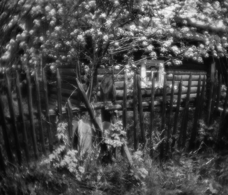 монокль, пикториализм, чб Веснаphoto preview