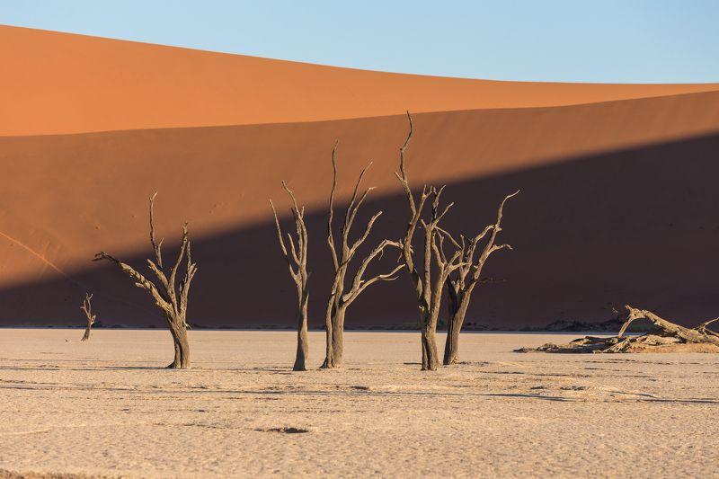 Две недели Намибииphoto preview