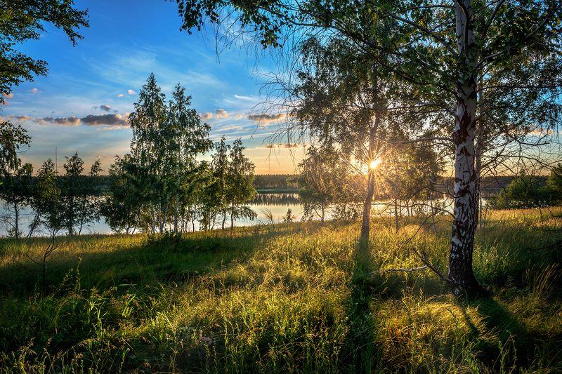 вечер,закат,лучи,берёза,сосна,трава Солнечный вечерphoto preview
