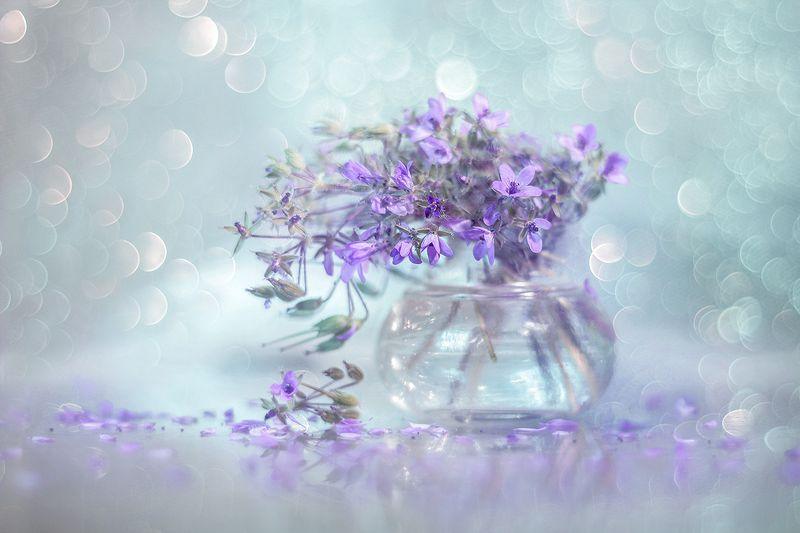iglica,pospolita,kwiaty,bokeh,natura,martwa,przyroda Iglica pospolitaphoto preview