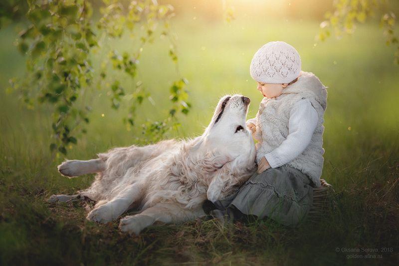 собака, белая собака, ретривер, голден, лето, лес, свет, солнце, ребенок, дружба, счастье, радость, ребенок и собака Носикиphoto preview