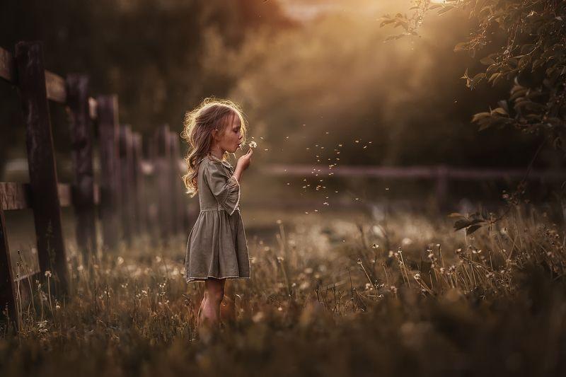 лето, одуванчики, поле, луг, девочка, ребенок, детство, закат, москва Июньский вечерphoto preview
