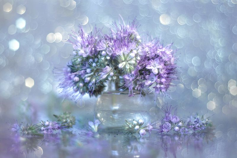 facelia,błękitna,kwiaty,lato,bokeh,natura,przyroda Facela błękitnaphoto preview