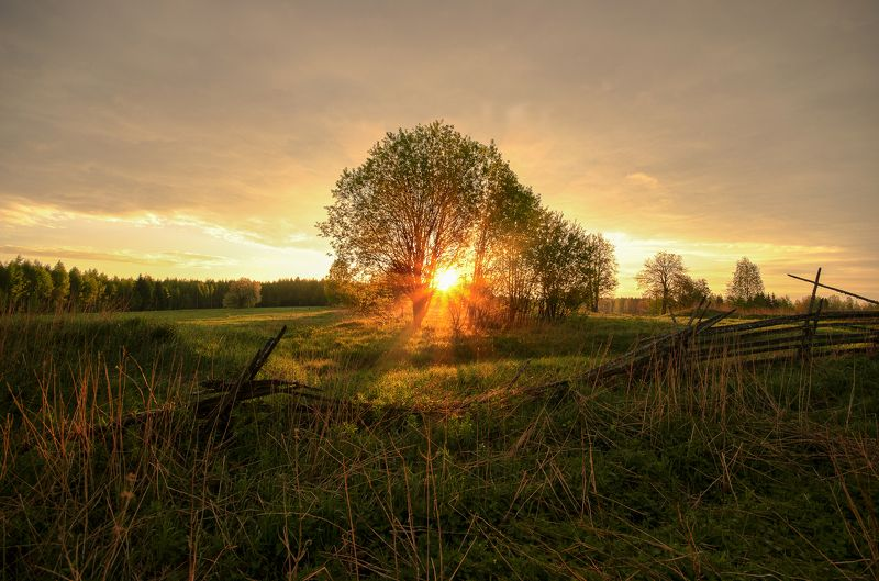 лето,солнце,природа,Вятка,тепло На рассветеphoto preview