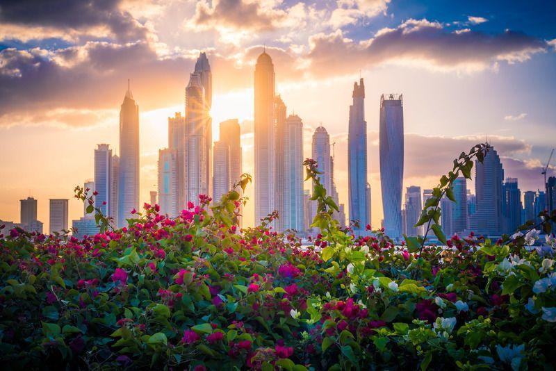 dubai, architecture, flowers, skyscrapers, cityscape, дубай, оаэ, город, архитектура, небоскребы, цветы, рассвет, утро Городские цветыphoto preview