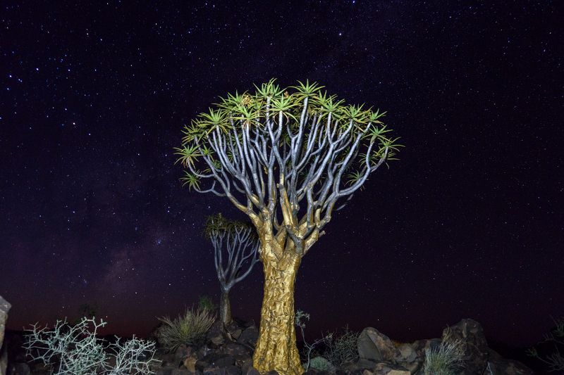 Namibia Quivertree Foresst Rest Campphoto preview