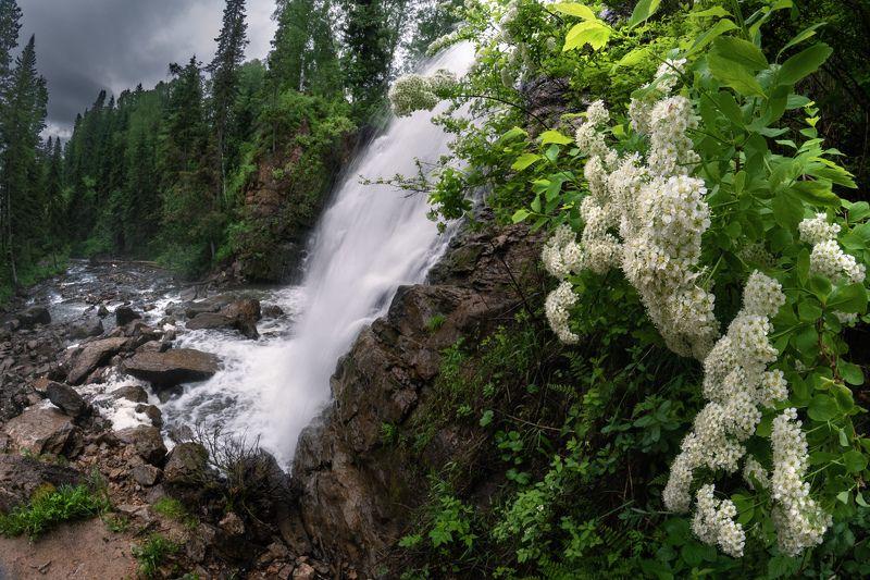 #алтай, #салаир, #салаирскийкряж, , #алтайскийкрай, #пещёрка, #пейзаж, #nature, #flowers, #flora, #plants, #wildlife, #storm, #beforethestorm, #altai, #russia, #salair, #waterfall, #water, #ravine, #landscape, #taiga, #тайга, #лес, #forest, #спирея, #водо Где Альф бежит, поток священный...photo preview