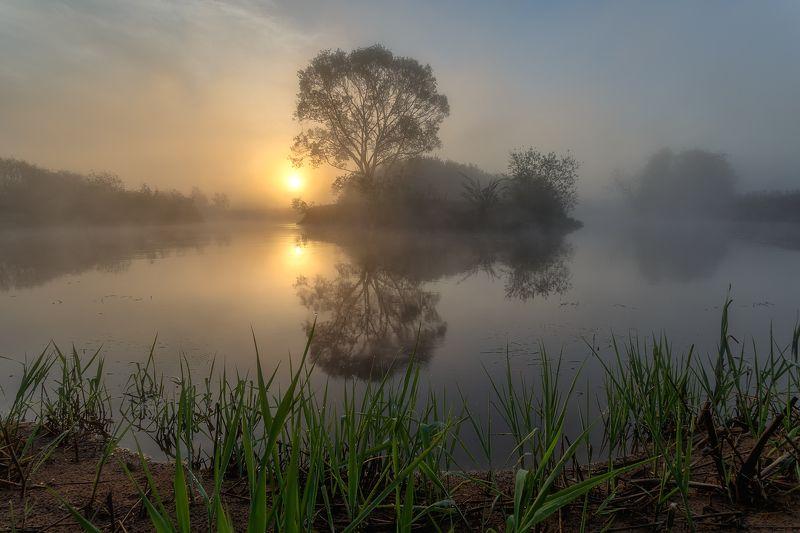 Магия утра создаёт иллюзию.photo preview