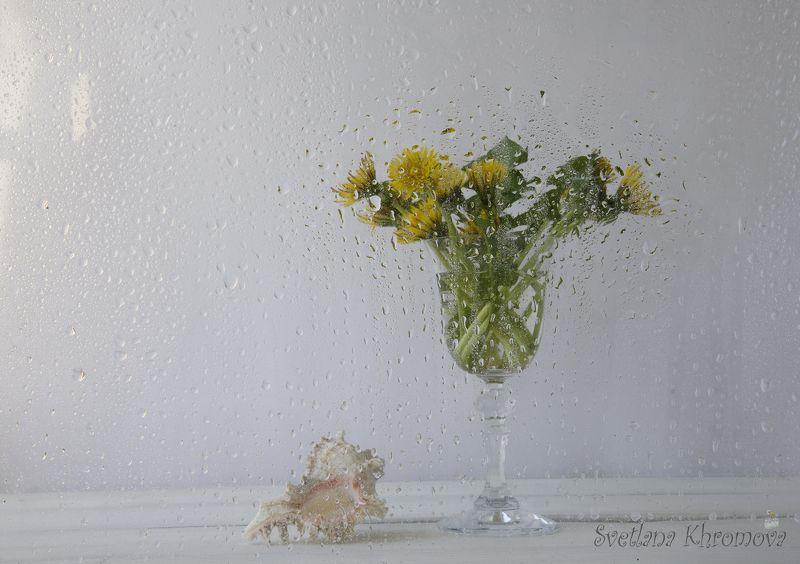 одуванчики, лето, дождь, цветы Лето. Дождь. Одуванчикиphoto preview