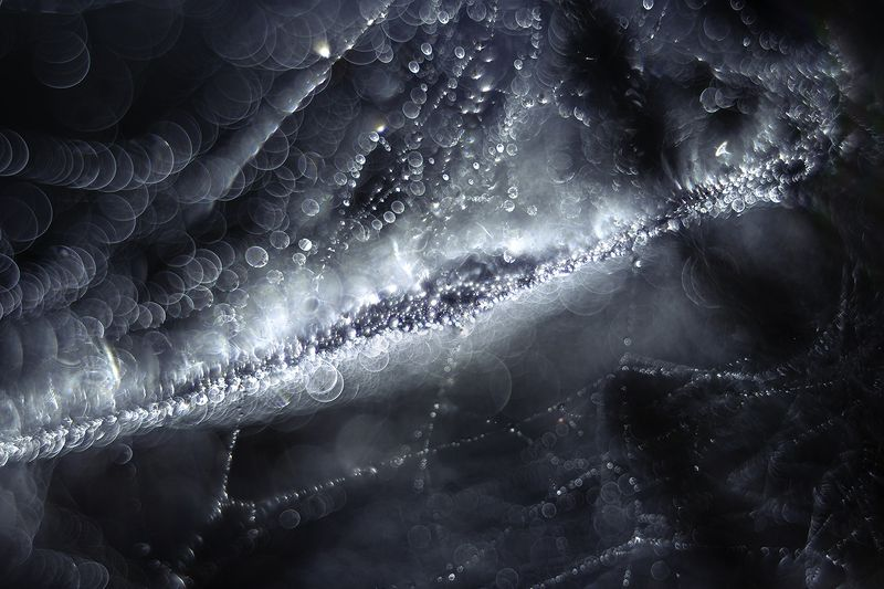 macro, spider web, bokeh, blue, drops My Way to Milky Way (spider web)photo preview
