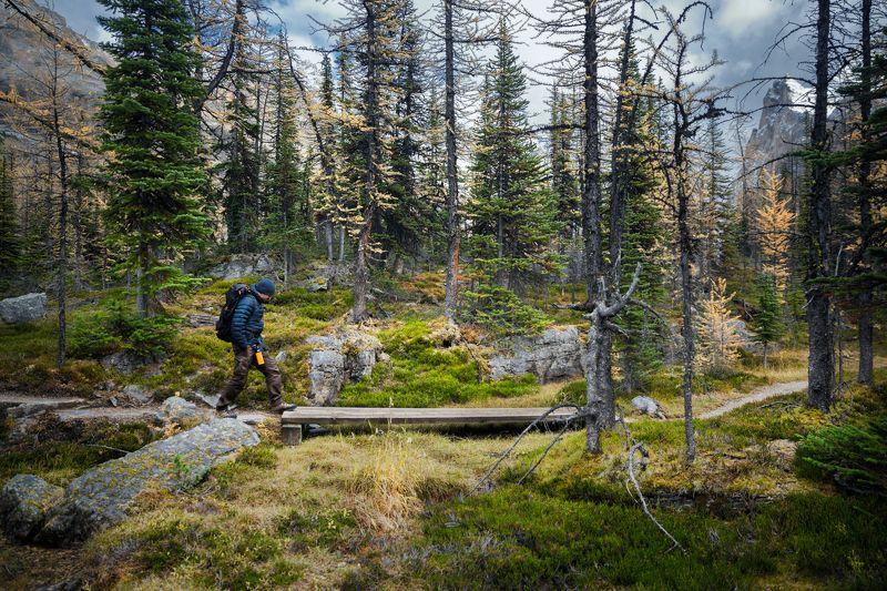 путешествия, канада, британская колумбия, йохо, опабин плато, лес, альпийский, приключение, альпинизм, турист, мост, тропа,travel, canada, british columbia, yoho, opabin plateau, forest, alpine, adventure, backpacking, hiker, bridge, trail, wooden, Trail in the forestphoto preview