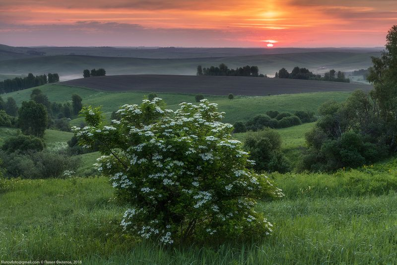 калина, алтай, алтайский край, рассвет, восход, предгорья, цветение Калиновый рассветphoto preview
