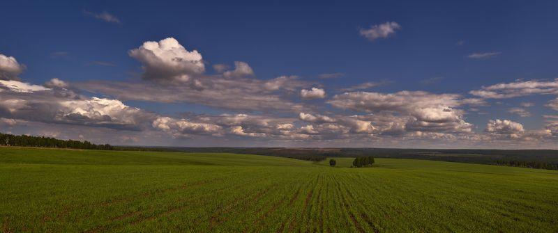 простор, поле, всходы, голубое небо, белые облака Сибирские просторы... ( Welcome to Siberia ! )photo preview
