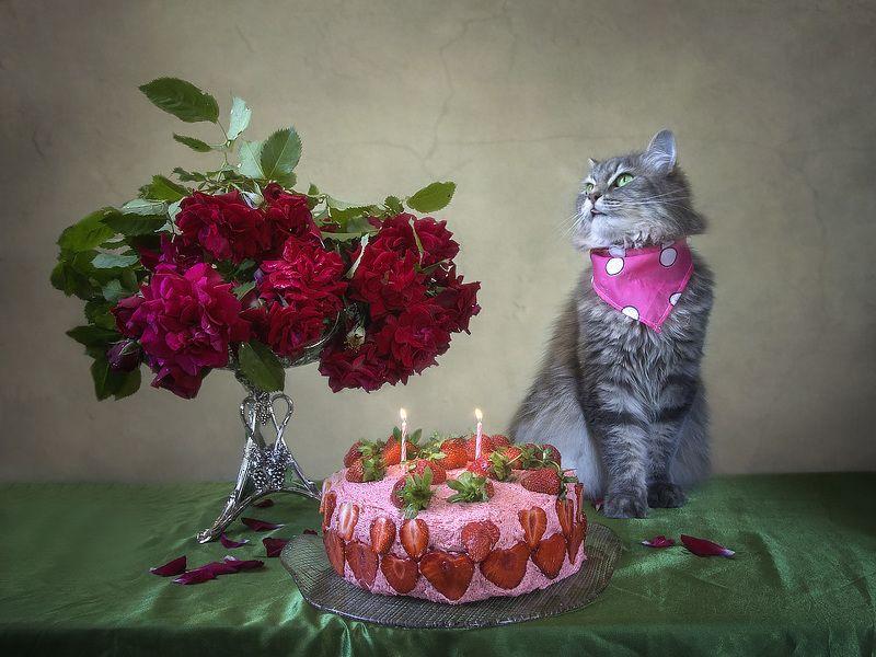 День рождения кота) Кото-натюрморты Ирины Приходько