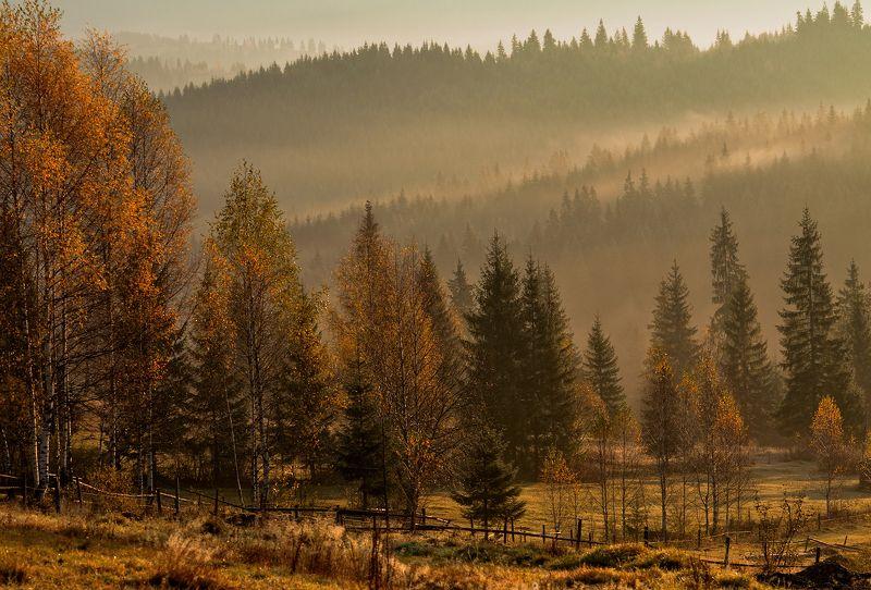 карпаты,осень, туман, утро, гооы Осеннее настроение...photo preview