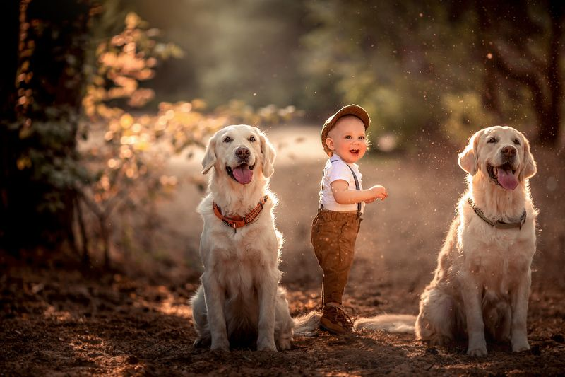 Мальчик, собаки, лес, закат, лето photo preview