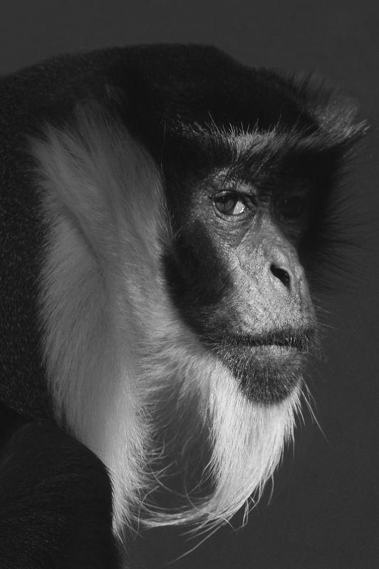 Diana Monkeyphoto preview