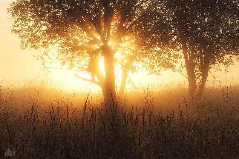 утро, туман, деревья, лучи, свет, photo preview
