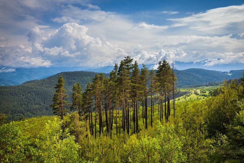 гора, планина, бял бор, облаци, пейзаж, родопа, българия Стоящийphoto preview