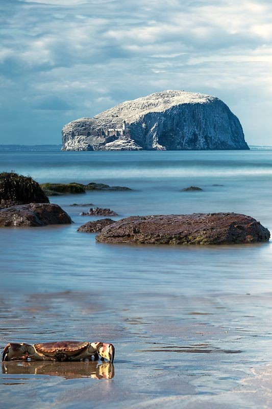 море скалы маяк краб птицы  Bass Rock Шотландия  Холодное лето Шотландииphoto preview