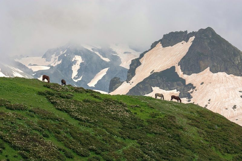 На склонах Кавказаphoto preview