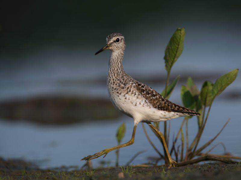 птицы,природа,весна Фифи на прогулкеphoto preview