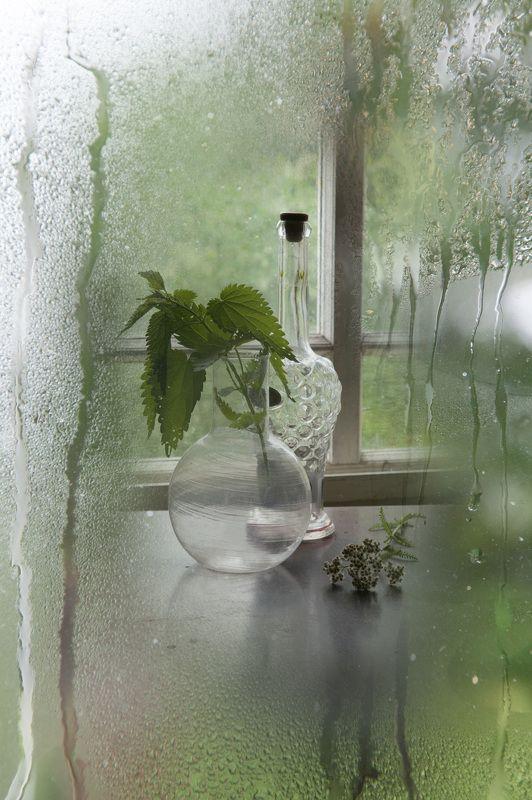Дождливый натюрмортphoto preview
