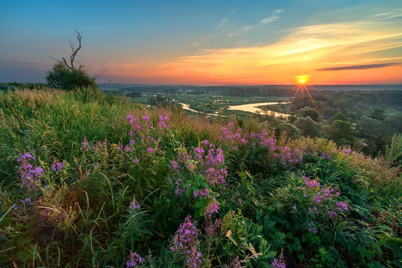 утро,рассвет,река,холмы,зелёная трава,цветы Краски летаphoto preview