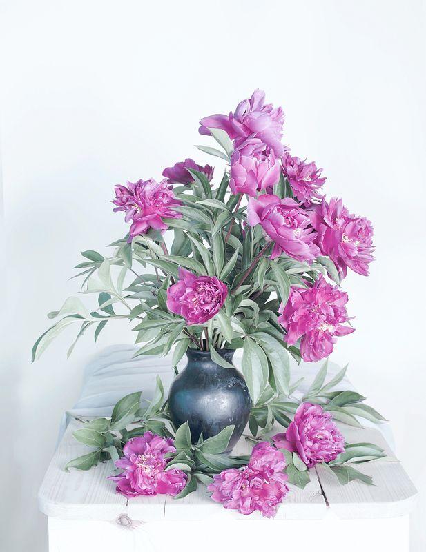 пионы,цветы,лето,июнь, Пионыphoto preview