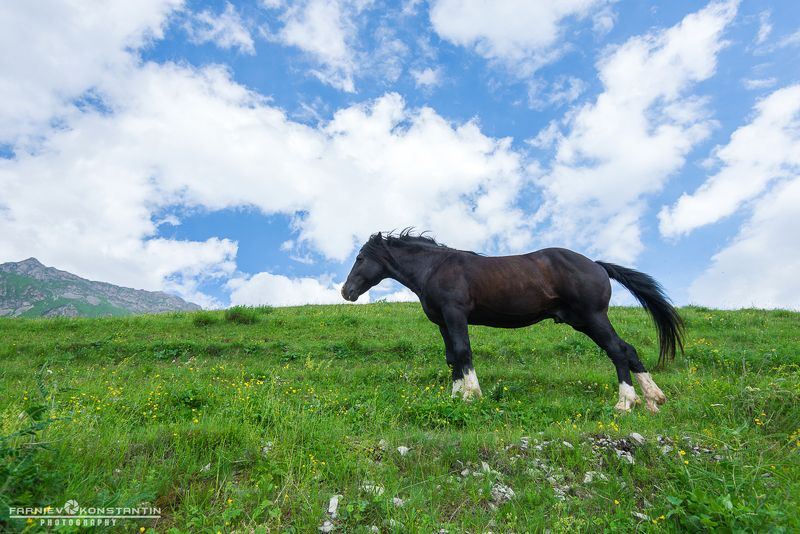 northern ossetia, horses, ossetia, russia, wild horses, Wild horses of Mountain Sanibaphoto preview