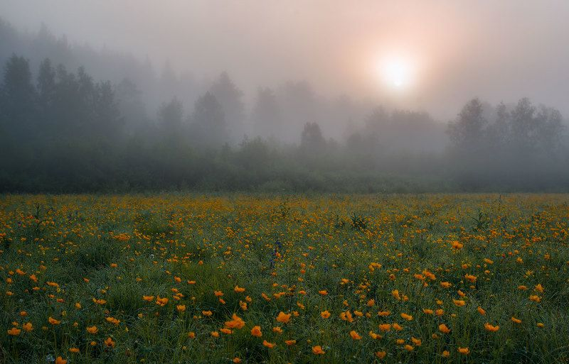 Однажды утромphoto preview