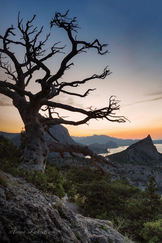 В горах Крымаphoto preview