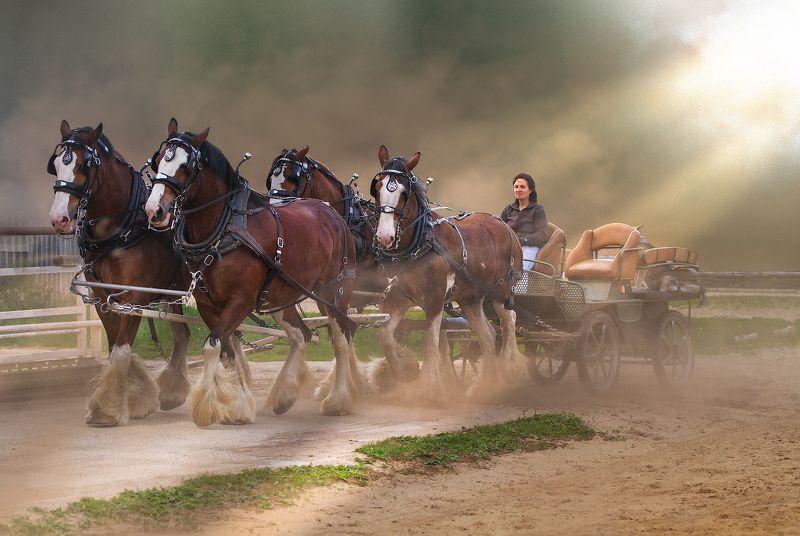 лошадь упряжка клейдсейдаль Клейдсейдаль репостphoto preview