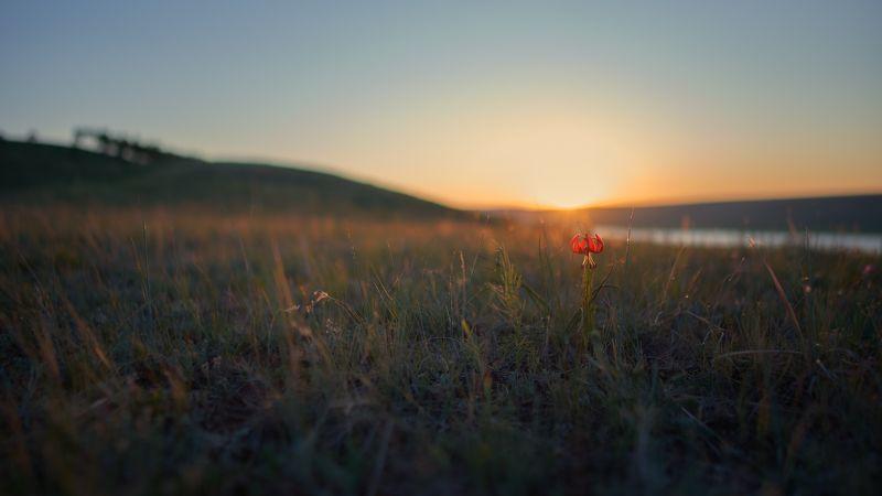 закат,вечер,степь,красная саранка, лилия кудреватая, вечерний июнь...photo preview