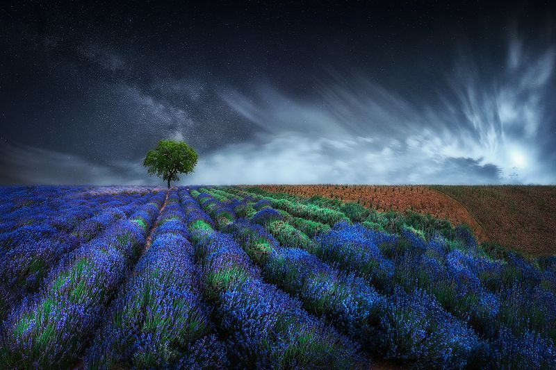 lavender, blue, magic, moody, field, summer, tree, night, milky way, sky, clouds Fairy tale, blue lavenderphoto preview