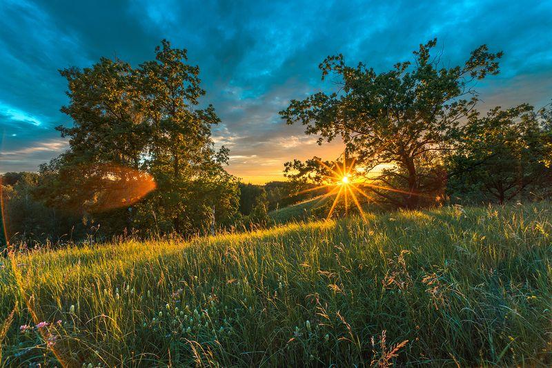 вечер,закат,лучи,дубы,цветы,берёза,сосна,трава Тёплый солнечный вечерphoto preview