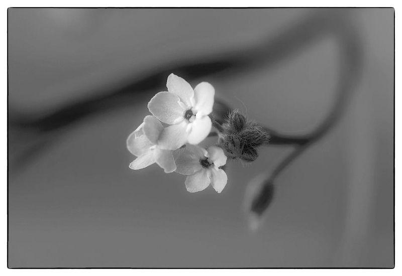 Черно-белое настроениеphoto preview