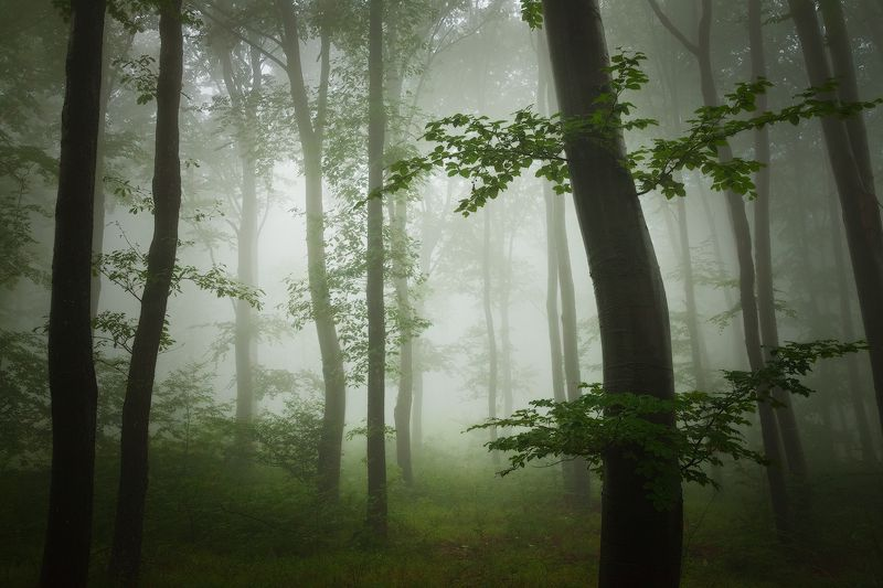 темный, лесной, яркий, туман. горы, родопы, лето Темный лес Яркий туманphoto preview