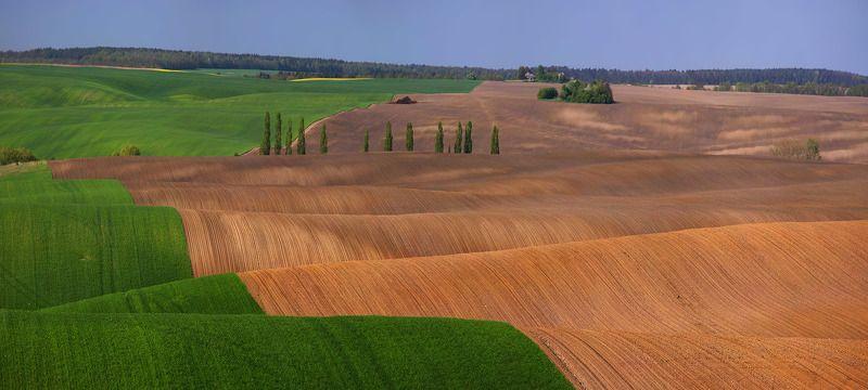 волынь, поле, лето, *****photo preview