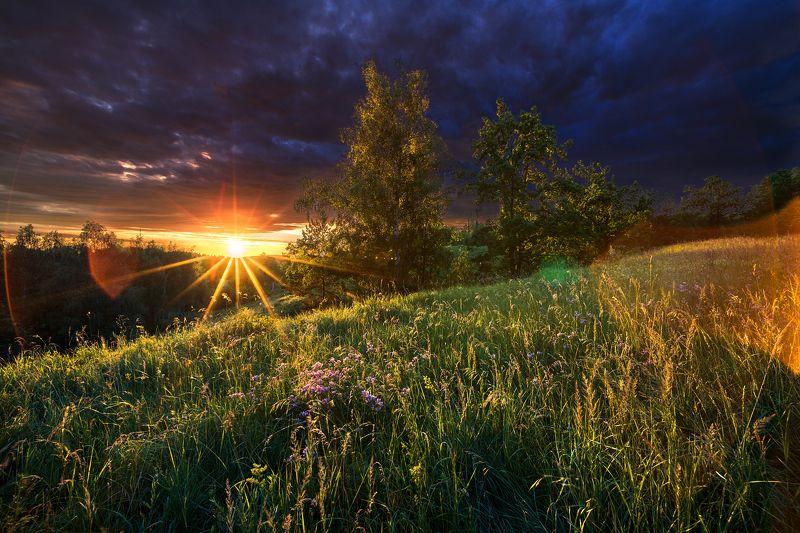 вечер,закат,лучи,берёза,сосна,трава Пасмурный вечерphoto preview