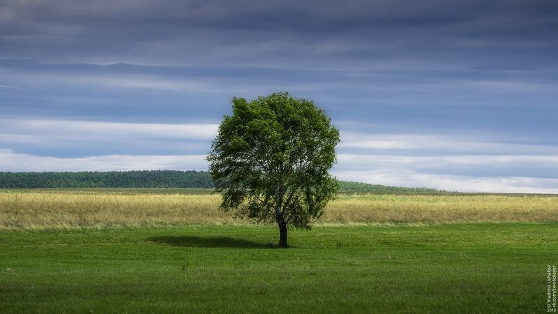 поле, дерево, облака, башкирия, республика башкортостан Одинокое деревоphoto preview