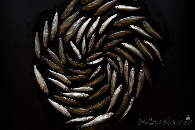 килька, рыба По кругуphoto preview
