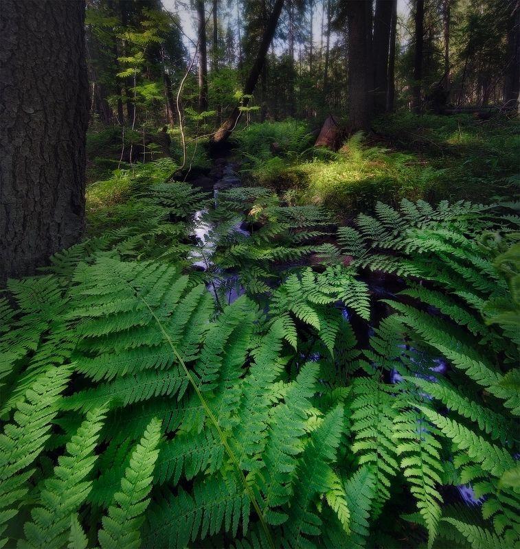 лес, папоротник Рощиноphoto preview