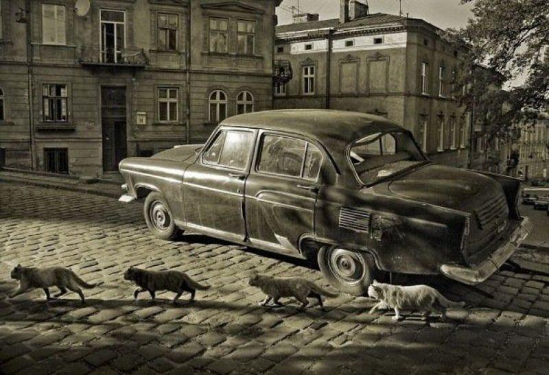 город, котов photo preview