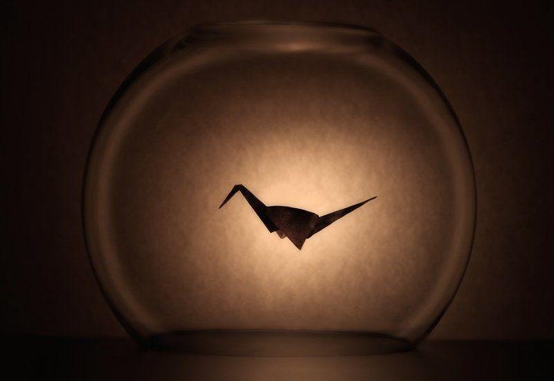 оригами, клетка, стекло Мне бы в небо...photo preview