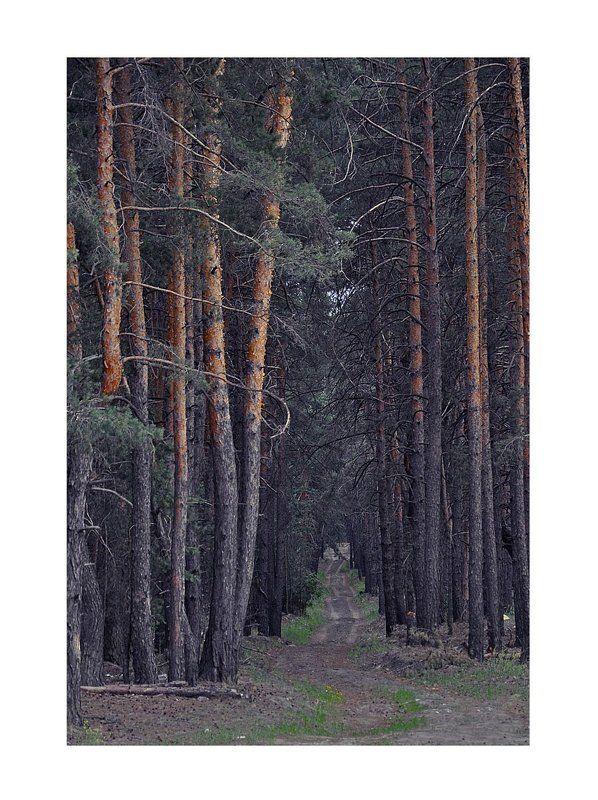 лес, дорога, тропа photo preview