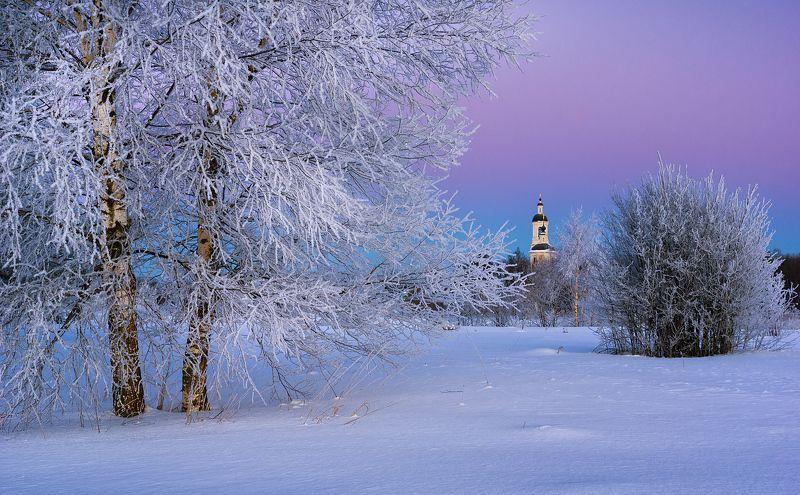 Two frozen birches фото превью
