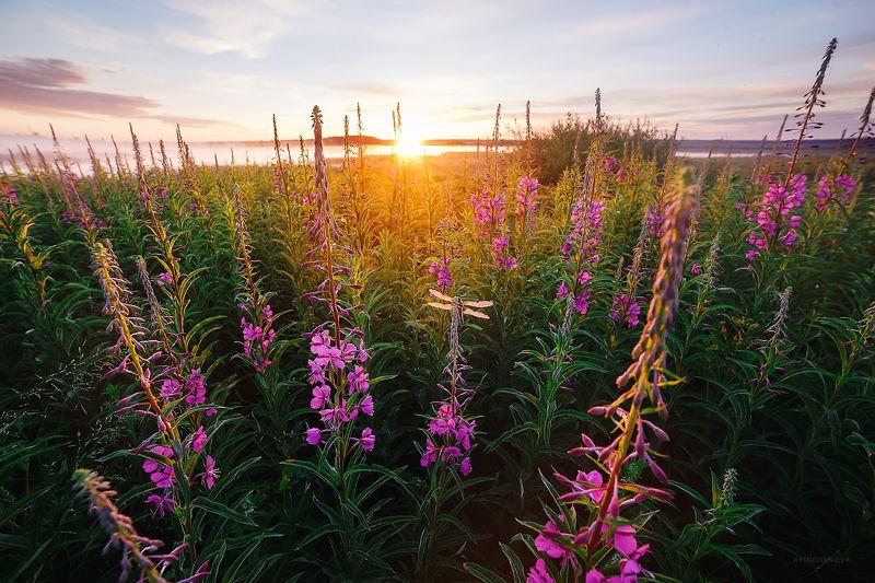 рассвет, солнце, цветы, лето Летнее настроениеphoto preview