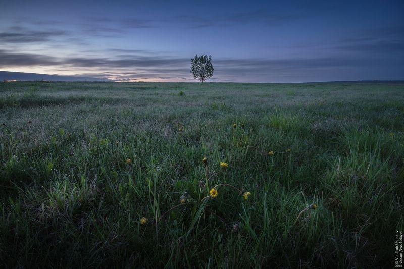 утро, рассвет, поле, дерево, одуванчик, пермский край В поле на рассветеphoto preview