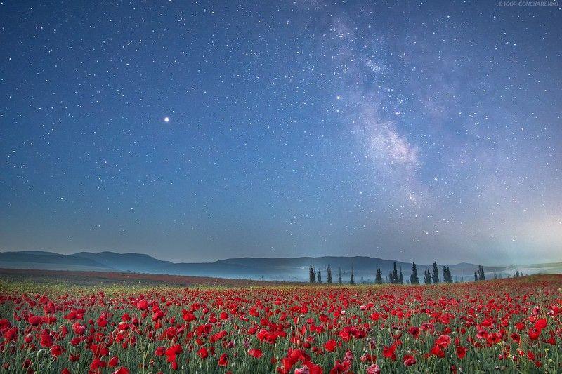 маки, поле, крым, ночь, звезды, млечный путь Ночные...photo preview